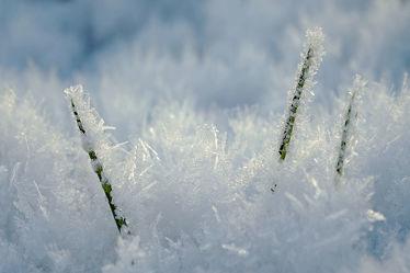 Bild mit Grün, Gräser, Winter, Schnee, Weiß, Sonne, Makro, Gras, Winterzeit, nahaufnahme, Kälte, Eiskristalle