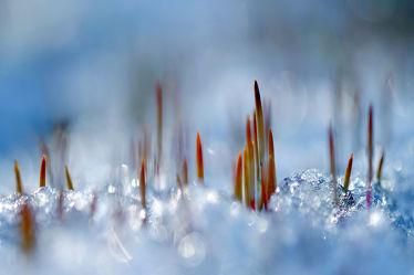 Bild mit Gelb, Schnee, Eis, Weiß, Rot, Blau, Sonne, Gras, Licht, Felder, Winterzeit, Frost, Wiesen, Idylle, Moos