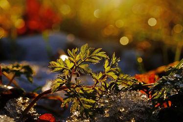 Bild mit Gelb, Pflanzen, Winter, Schnee, Eis, Blumen, Rot, Blau, Sonne, Blätter, Licht, Bunt, Felder, Winterzeit, FARBE, farbig, Frost, Wiesen, Ausspannen, Idylle, Wandbehang