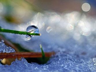 Bild mit Gräser, Winter, Schnee, Eis, Sonne, Sonnenschein, Makro, Gegenlicht, Wassertropfen, Tropfen, Winterzeit, nahaufnahme, Moose, Farne, Schneetropfen