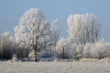 Bild mit Landschaften, Himmel, Bäume, Winter, Weiß, Blau, Sonne, Braun, Felder, Felder, Winterzeit, Erholung, Wiesen, Wiesen, Wandern, Ausspannen, Rauhreif, Raureif, Dunst
