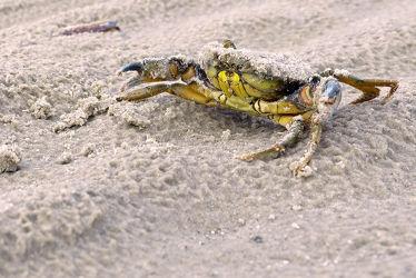 Bild mit Sand,Sonne,Kies,Meer,Nordsee,See,Strand / Meer,nahaufnahme,Abendsonne,Nationalpark,Sandbänke,Flußkrebs,Krebse