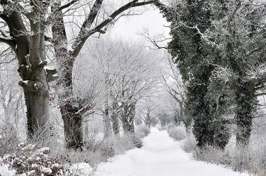 Bild mit Bäume, Winter, Schnee, Sträucher, Wanderweg, Winterzeit