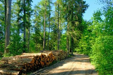 Bild mit Bäume, Bäume, Frühling, Tanne, Fichten, Wald, Waldweg, Wanderweg