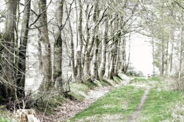 Bild mit Grün,Bäume,Bäume,Frühling,Wald,Baum,Gras,Wanderweg,Textur,grau,Speziell,Laubengang,Bildmanipolation,Farbarm,Baumreihe