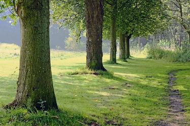 Bild mit Landschaften, Bäume, Nebel, Allee, Morgenstimmung, Dunst