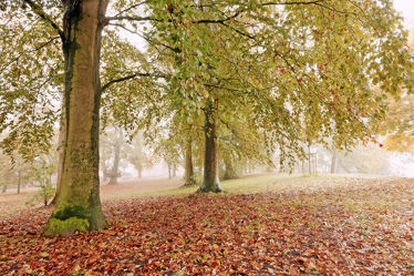 Bild mit Bäume, Herbst, Herbst, Wege, Nebel, Textur, Wandern, Dunst