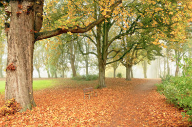 Bild mit Bäume, Herbst, Herbst, Nebel, Blätter, Sitzbank, Textur, Erholung, Wandern, Dunst, Ruheplatz