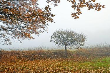 Bild mit Bäume, Weiß, Herbst, Herbst, Nebel, Braun, Blätter, Morgenstimmung, grau, Dunst