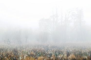 Bild mit Bäume, Herbst, Herbst, Wege, Nebel, Felder, Moor, Dunst, Kopfweiden