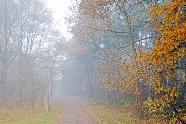 Bild mit Bäume, Herbst, Herbst, Wege, Nebel, Wald, Wanderweg, Wandern, Ausspannen, Dunst