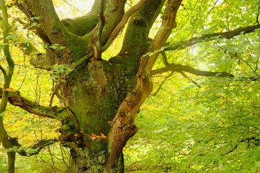 Bild mit Bäume, Herbst, Wald, Baum, alt, Rinde, Moose