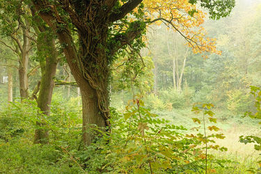 Bild mit Bäume, Sträucher, Nebel, Sonne, Wald, Lichtung, Sonnenlicht, Sonnenlicht, Schatten, Dunst