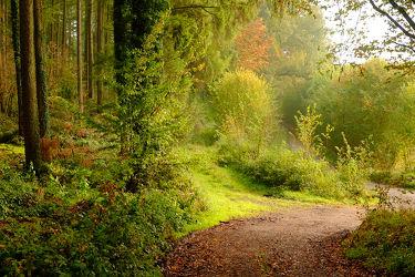 Bild mit Bäume, Herbst, Sträucher, Sonne, Wald, Sonnenlicht, Sonnenlicht, Wandern, Ausspannen, Schatten