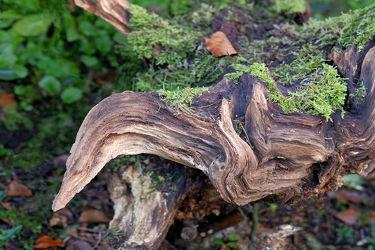 Bild mit Bäume, Wald, Blätter, Waldboden, Moos, Leben, Zusammenleben, Baumstumpf