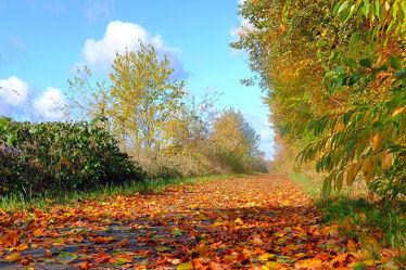 Bild mit Himmel, Bäume, Wolken, Herbst, Sträucher, Bunt, Felder, FARBE, farbig, Erholung, Wiesen, Wandern, Ausspannen, Laub, Laubwanderweg