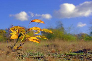 Bild mit Landschaften, Himmel, Wolken, Herbst, Sträucher, Blätter, Felder, Erholung, Wiesen, Ausspannen, Moose, Bunte
