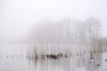 Bild mit Bäume,Winter,Gewässer,Herbst,Vögel,Nebel,See,Ruhe,Winterzeit,Stille,Erholung,Ausspannen,reet,Dunst,Morgenstille