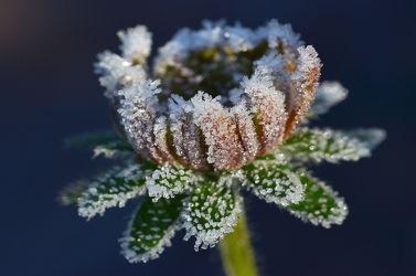 Bild mit Winter, Blumen, Herbst, Makro, Winterzeit, nahaufnahme, Eiskristalle