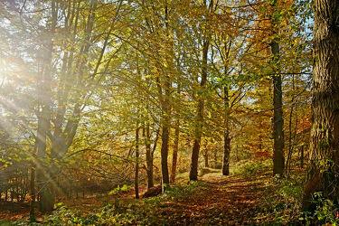 Bild mit Bäume, Wälder, Herbst, Sonne, Wald, Waldweg, Ruhe, Sonnenstrahlen, Sonnenlicht, Wandern, Entspannen