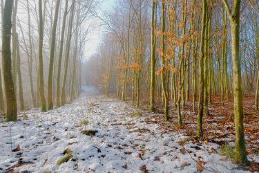 Waldrandwanderweg