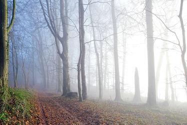Nebelschwaden ziehen durch den Wald