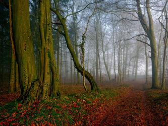 Bild mit Grün, Winter, Herbst, Rotbraun, Nebel, Sonne, Braun, Waldweg, Blätter, Herbstblätter, Idylle