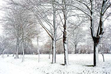 Bild mit Bäume, Winter, Schnee, Felder, Winterzeit, Winterzeit, Kälte, Wärme, Idylle, Nässe, Rarität, Wetterumschwung, Winteridylle