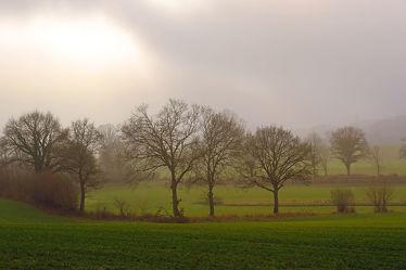 Bild mit Grün, Landschaften, Himmel, Winter, Wolken, Sträucher, Schwarz, Nebel, Felder, Winterzeit, Wiesen, Sonnenlicht, Spätherbst, Dunst, Haine, Knicks, Hell, Nebelschwaden, Hellgrün, Säume
