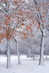 Bild mit Bäume, Winter, Schnee, Blätter, Buchen, Tapete, Winterzeit, Winterzeit, Kälte, Wärme, Idylle, Nässe, Rarität, Wetterumschwung, Winteridylle