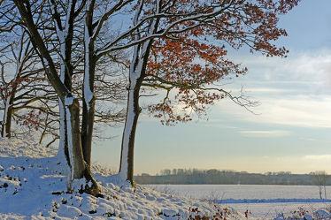 Bild mit Bäume, Schnee, Landschaft, Gegenlicht, Winterzeit, Abendlicht