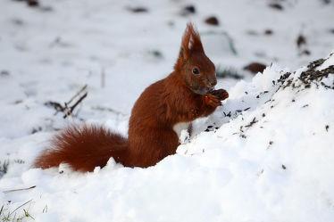 Bild mit Säugetiere, Schnee, Eichhörnchen, Futter