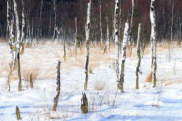 Bild mit Natur, Bäume, Winter, Schnee, Wälder, Birken, Wald, Baum, Birke, Kälte, Frost, Moor