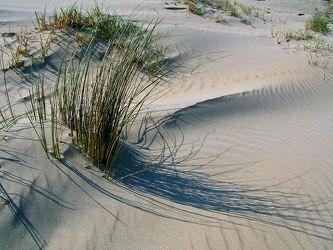 Bild mit Gräser, Sand, Inseln, Ostsee, Dünen, Dünengras, Ostfriesland, Ostfriesische_Inseln, Nordsee_Inseln