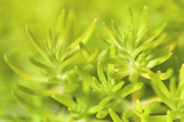 Bild mit Grün, Grün, Dickfleischpflanze, Einfarbig