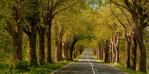 Bild mit Bäume, Herbst, Licht, Sonnenlicht, Verkehr, baumallee, Rügen, Schatten, Spätsommer, Strassen, Herbstanfang