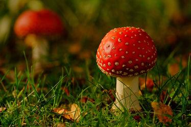 Bild mit Natur, Grün, Pflanzen, Gräser, Wälder, Weiß, Parks, Rot, Bunt, Felder, garten, nahaufnahme, farbig, Wiesen, Unterholz, fliegenpilz, Schatten