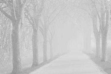 Bild mit Bäume, Winter, Herbst, Nebel, Alleen, Allee, Kälte, Kälteeinbruch, Vorsicht, Wärmeeinbruch, Wetterwechsel, Strassen, Achtung, Autofahrer