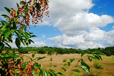 Bild mit Pflanzen, Gräser, Bäume, Herbst, Sträucher, Beeren, Hitze, Dürre, Trockenheit, wiesengräser, Hochsommer