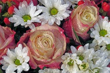 Bild mit Blumen, Blume, Tropfen, Tränen, Blumemstrauss, Diamanten