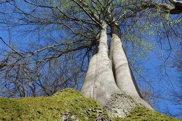 Bild mit Grün, Frühling, Wald, Baum, Baumstamm, Blätter, frühjahr, Moos, Froschperspektive, stamm