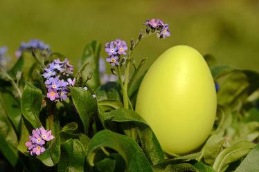 Bild mit Gelb, Grün, Blumen, Parks, Lila, Blätter, Ostern, garten, Ei, Vergißmeinnicht, Blaublühend, Osterei