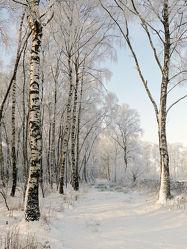Bild mit Schnee, Sonnenschein, Wanderweg, winterlandschaft, Schneelandschaften