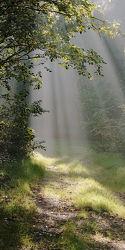 Bild mit Nebel, Weg, Waldweg, Licht, Sonnenstrahlen, Sonnenlicht, Ausspannen, Dunst, Strahlen, Strahlen, Lebensweg