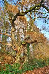 Bild mit Bäume, Herbst, Landschaft, alt, Knorrig
