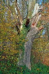Bild mit Bäume, Herbst, Wind, Orkan, Herbststürme, Sturmschäden, Astabbrüche