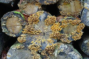 Bild mit Bäume, Herbst, Wald, Pilze, Wegesrand, stämme