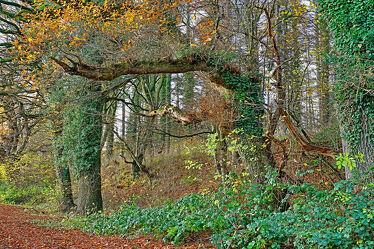 Bild mit Natur, Landschaften, Bäume, Herbst, Sträucher, Wald, Waldrand, Äste, alt, efeu, Brombeeren, Öko, Naturwald, Astbruch