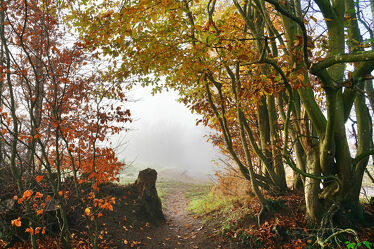 Bild mit Bäume, Winter, Herbst, Sträucher, Nebel, Kälte, Westensee, Naturpark, Knick, Erdwälle, Landschaftsformen