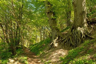 Bild mit Bäume, Wald, Wanderweg, Erholung, Wandern, Ausspannen, Rügen